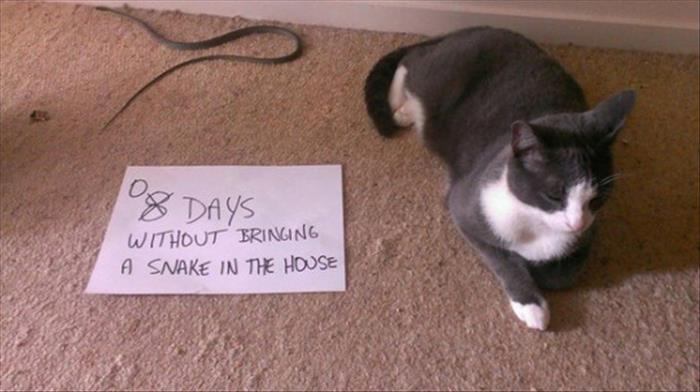 cat-snake-shaming-note