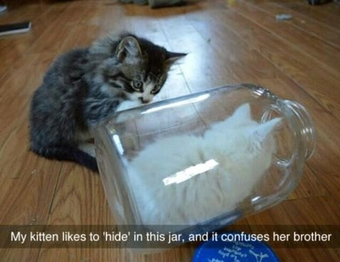 cats-jar-hide-confusing