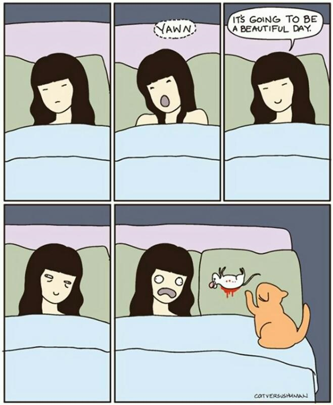 comics-cat-nouse-morning