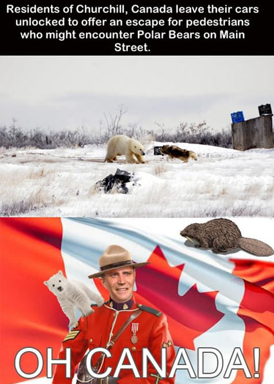 cool-Canada-flag-polar-bear