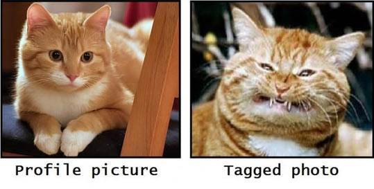cool-cat-happy-angry-photos