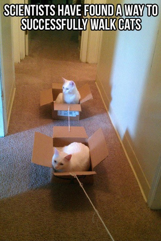 cool-cats-boxes-train-cute