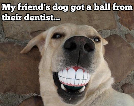 cool-dog-ball-tooth-smile