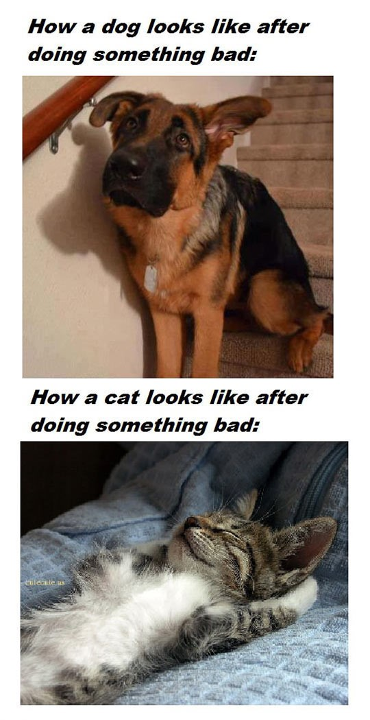 cool-dog-cat-bad-guilty