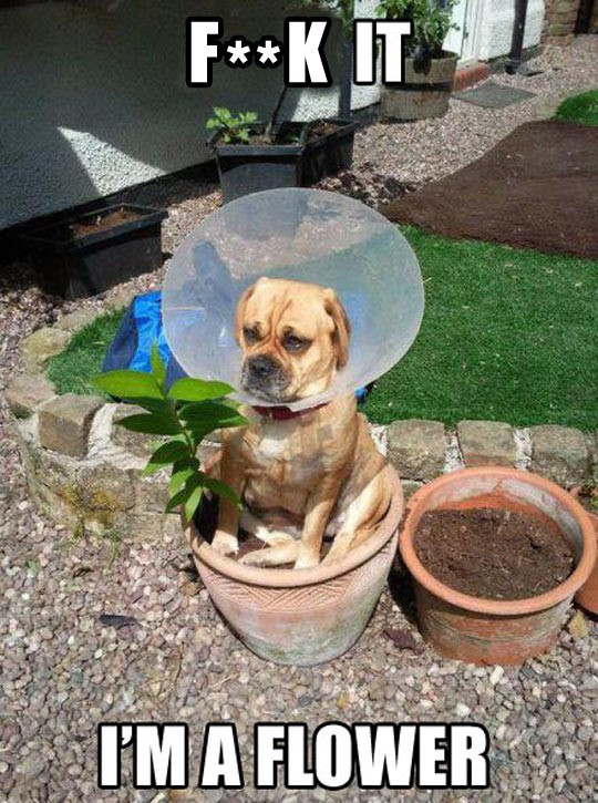 cool-dog-cone-plant