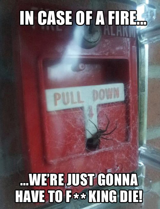 cool-emergency-fire-alarm-spider