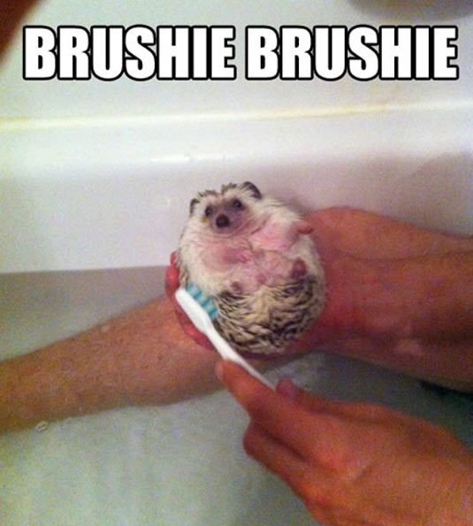 cool-hedgehog-bath-brush