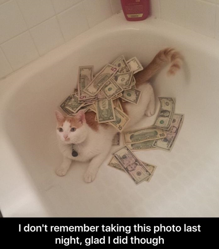 drunk-cat-money-bathroom
