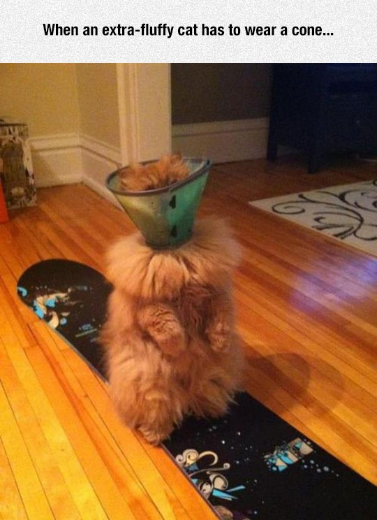 funny-fluffy-cat-cone-shame
