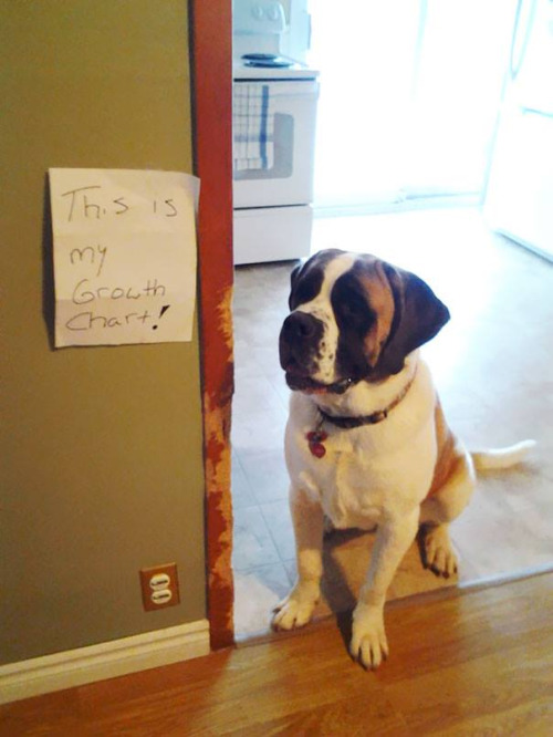 growth-chart-dog-door