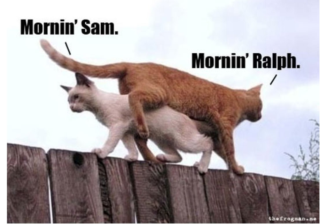 morning-cats-fence