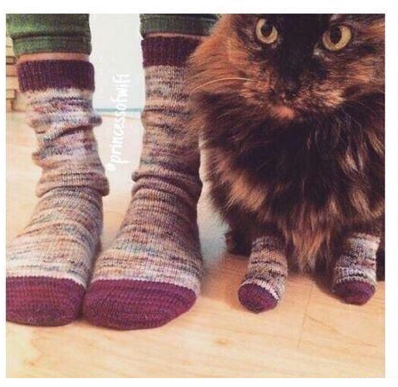 relationship-goals-cat-socks
