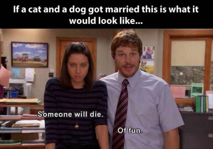 cat-dog-marriege-april-andy