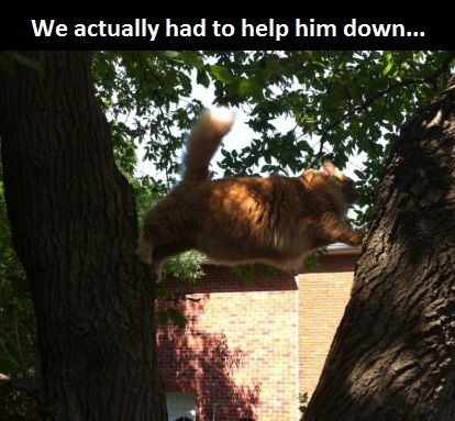 cat-fat-tree-stuck