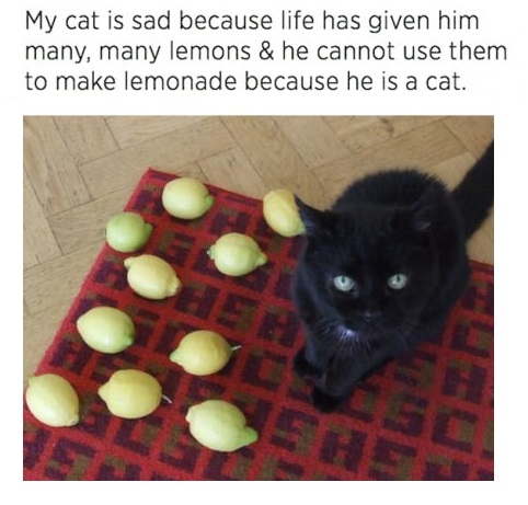 cat-lemons-lemonade-fail