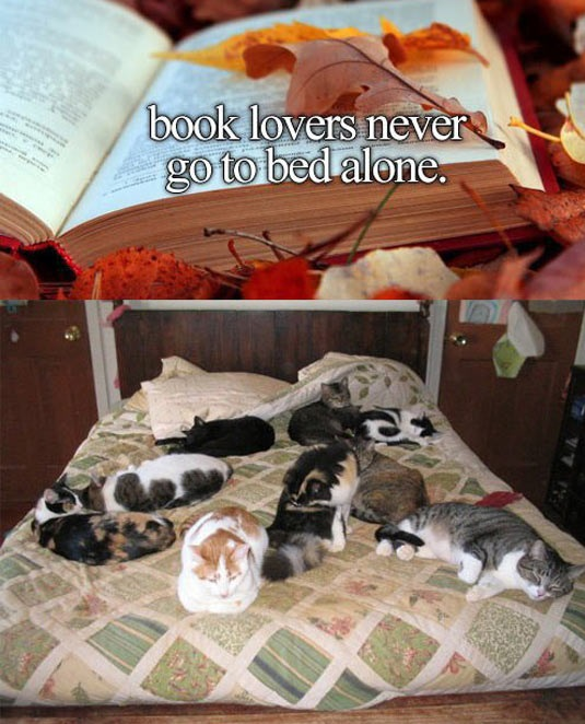 cool-book-lovers-cats-bed