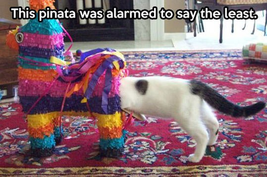 cool-cat-pinata-Mexican