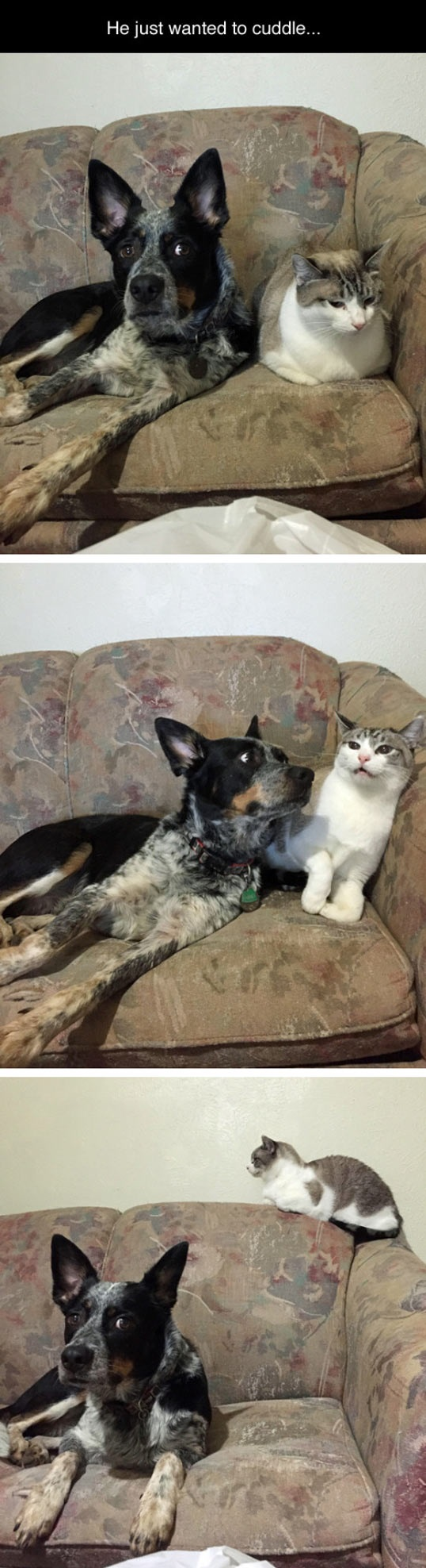 cute-cat-dog-cuddling-couch