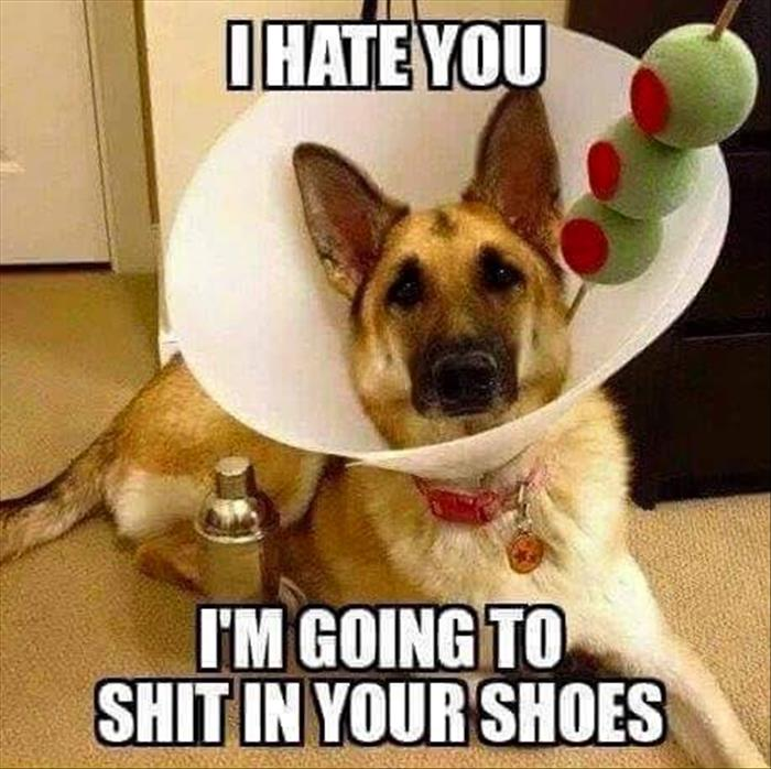 dog-hate-cone-martini