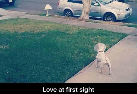 dog-lamp-cone-love