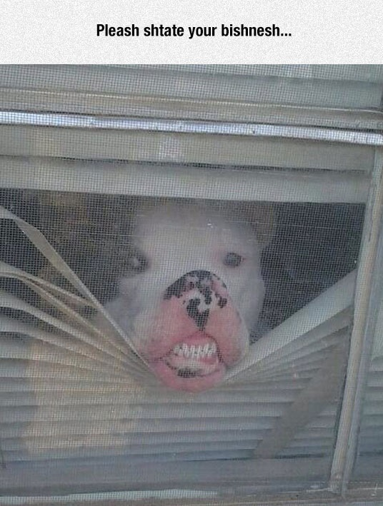 funny-dog-pressing-face-glass-teeth