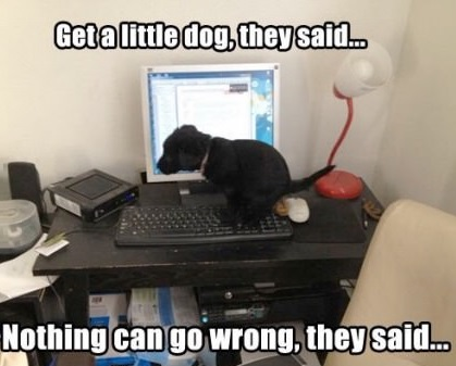 little-dog-computer-faik