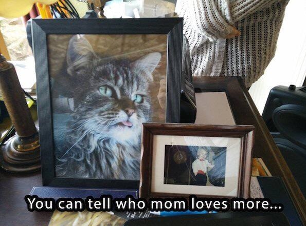 mom-love-cat-photos