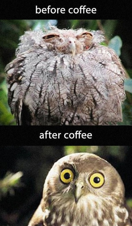 owl-coffee-before-after