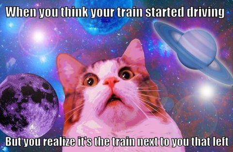 train-driving-cat-meme