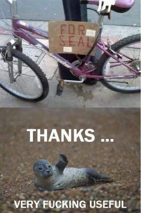 bike-spelling-wrong-seal