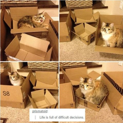 cat-boxes-decisions