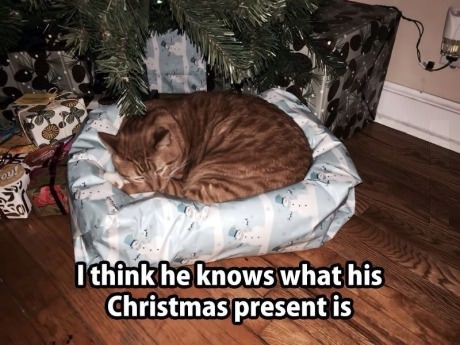 cat-christmas-present-bed