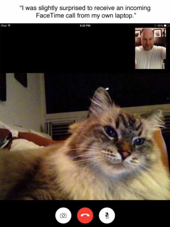 cat-laptop-facetime-call