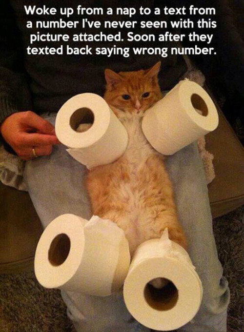 cat-photo-toilet-paper-wrong-number