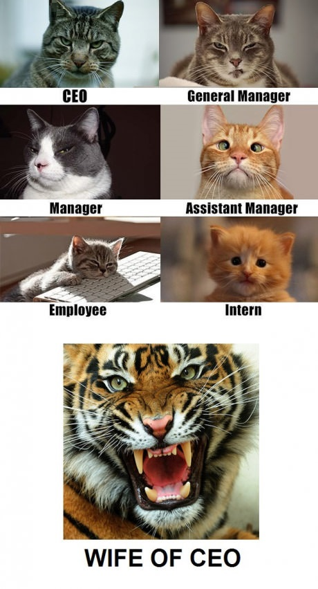 cats-ceo-employee-wife