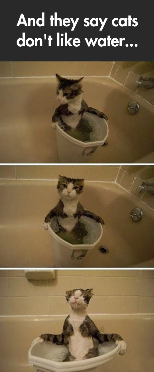 cool-cat-kitten-water-bubble