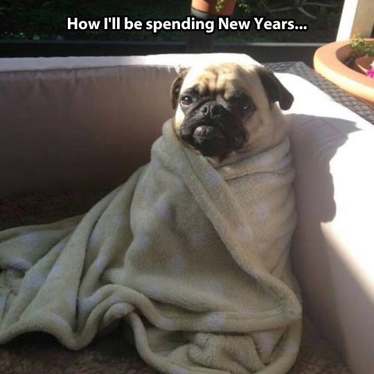 cool-pug-dog-New-Year