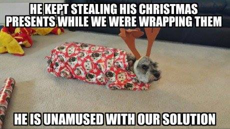dog-presents-stealing-wrap