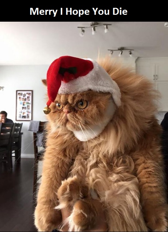 funny-cat-Christmas-hat-Santa