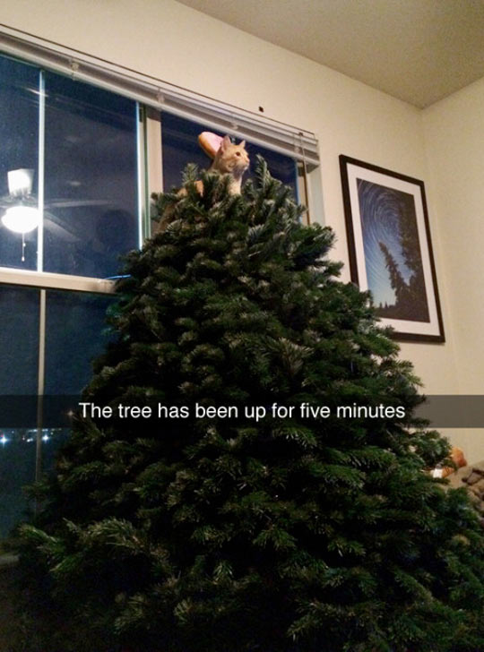 funny-cat-Christmas-tree-star
