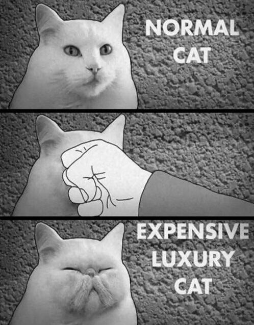normal-cat-expensive-luxury
