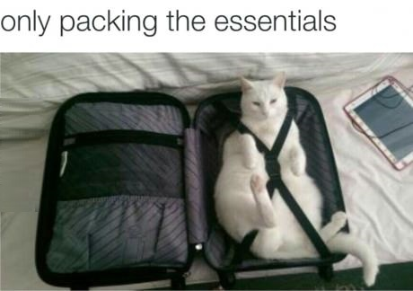 packing-essentials-cat-suitcase