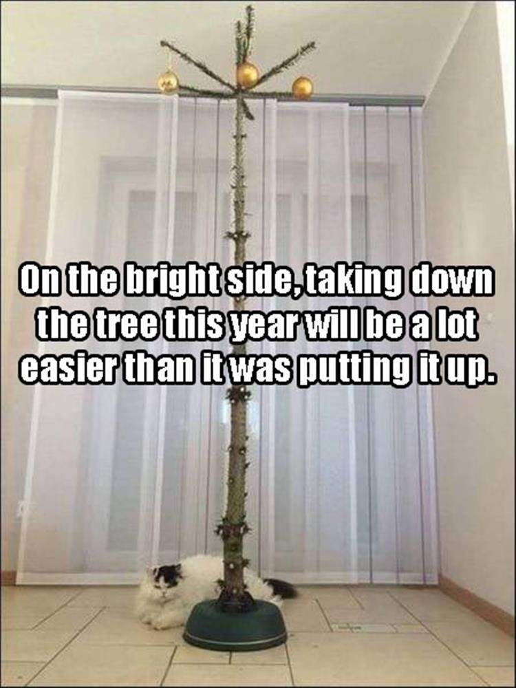 cat-christmas-tree-fail