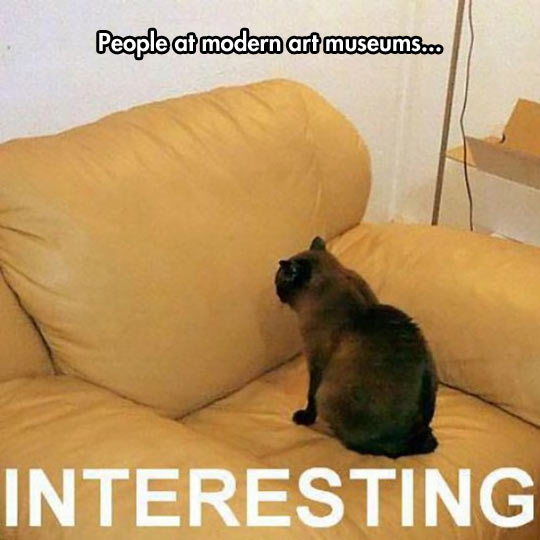 cool-cat-watching-couch-museums