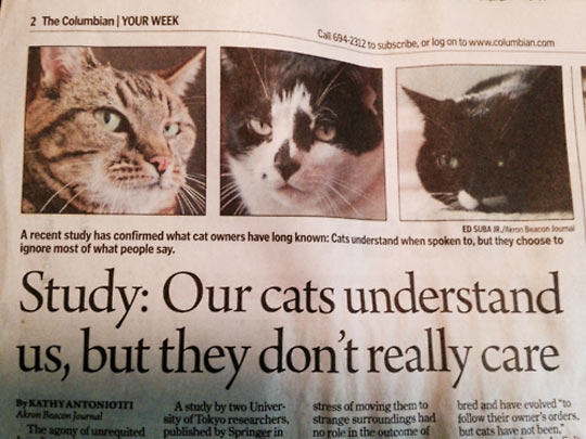cool-cats-understand-study-news-paper