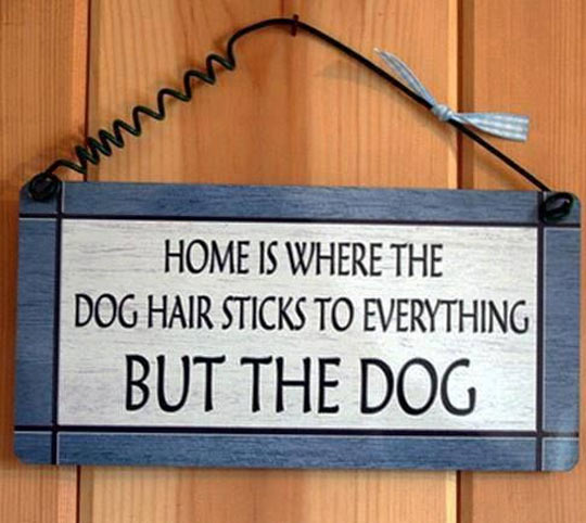 cool-home-sign-dog-hair