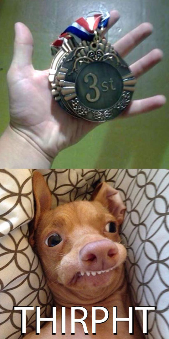cool-medal-misspell-dog-face-weird