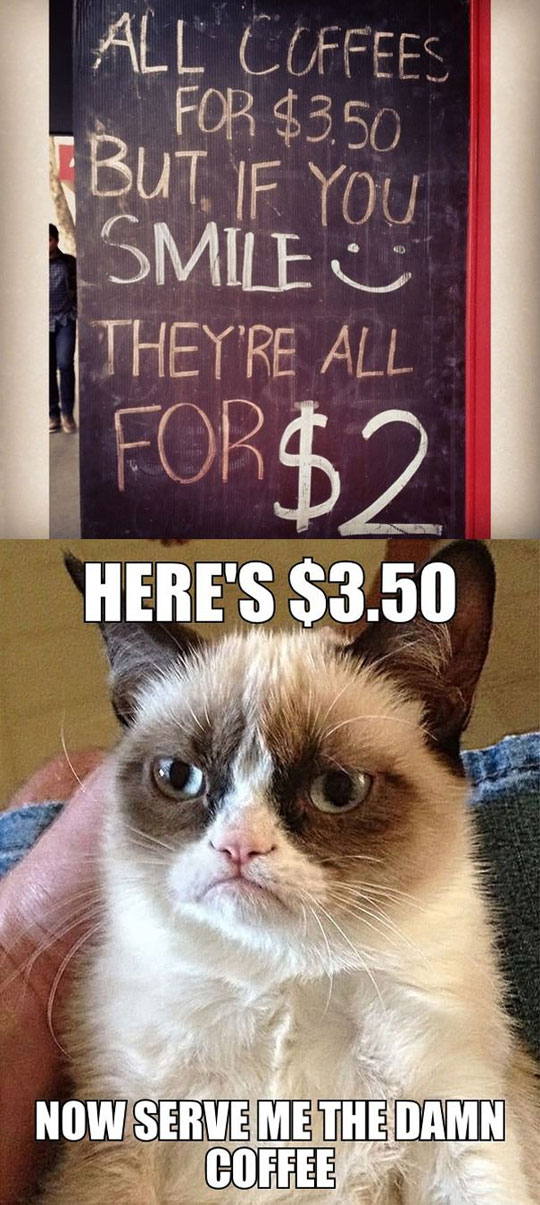 cool-sign-money-Grumpy-Cat