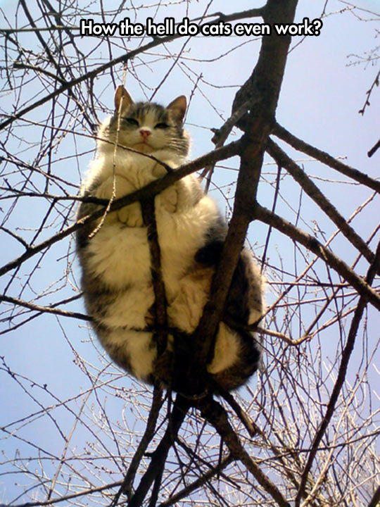cool-tree-cat-sitting-branches