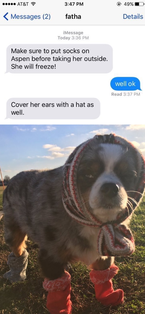 dog-cold-text-clothes